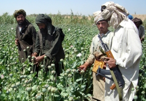 POPPY : TALIBAN REVENUE Earner