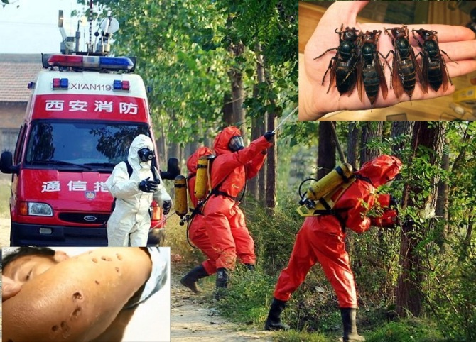 Chi9nese Fire Fighters Killing Hornets Nests in a Park