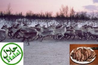 Norwegian Reindeer Halal Meat