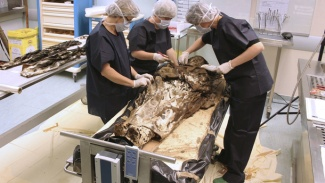 French Noble Woman Corpse Found fully intact after 350 Years. a